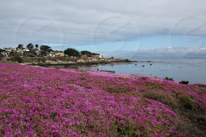 Pacific Grove California photo