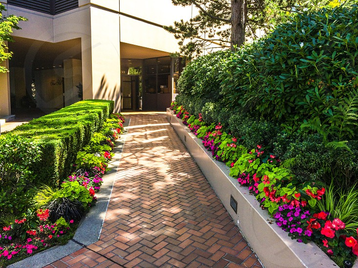 Lawn landscaping driveway edge flowers photo