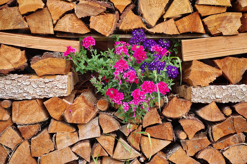 Stacked firewood decorated with flowers photo