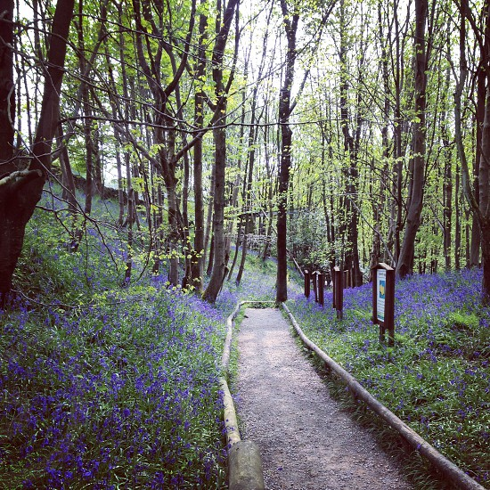 gray pathway surrounded by blue flower photo