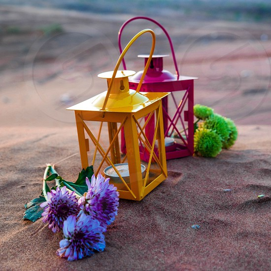 purple white petaled flower and yellow and pink lamp photo