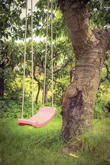 Swing in our garden photo