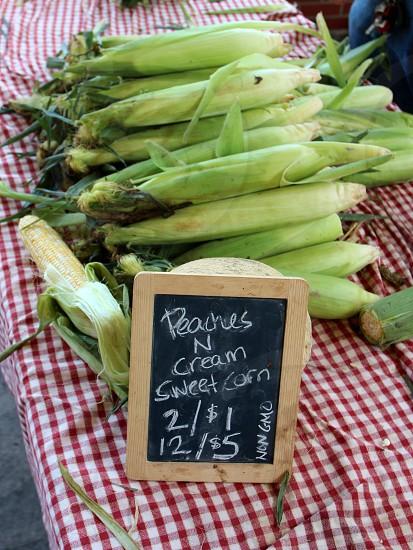 Green corn photo