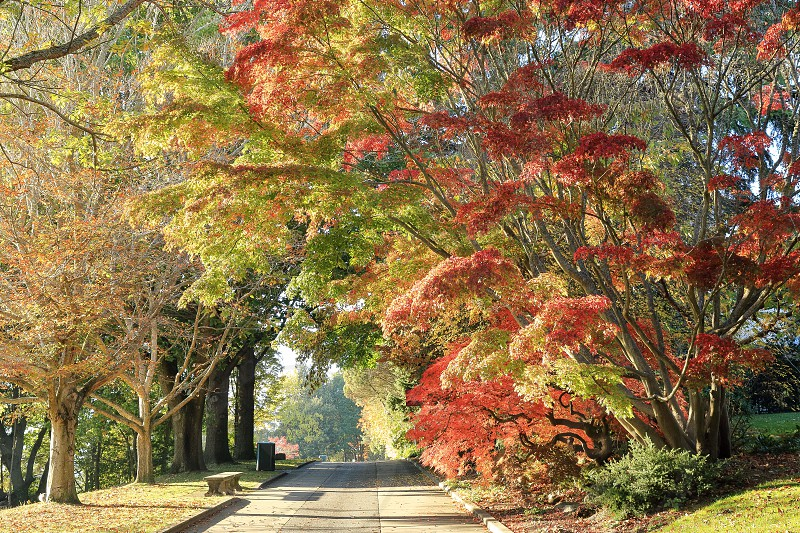 Beautiful fall colors at a park in Seattle photo