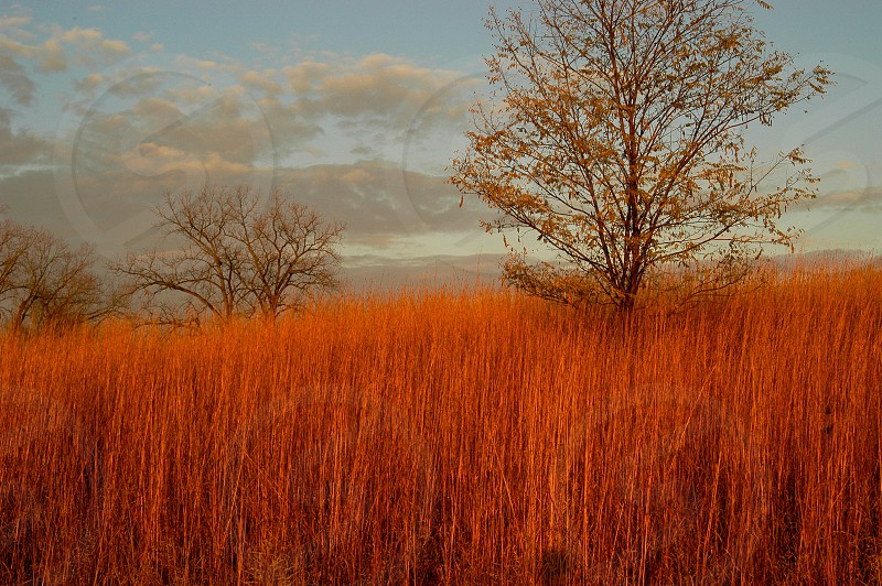Tall grass. Amber. Autumn. Fall. photo