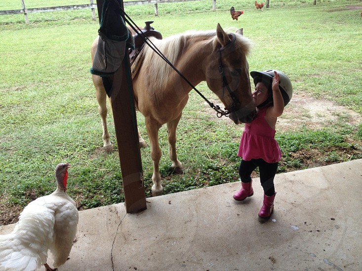 Horsey time photo