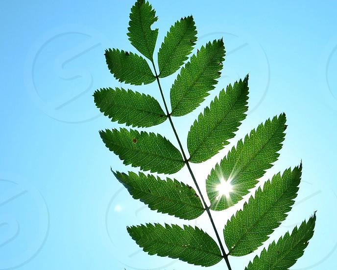 green leaf macro photography  photo
