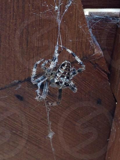 Spider spinning a web. Garden. photo