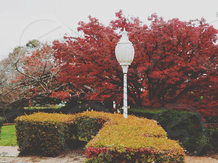 garden and street lamp photography photo