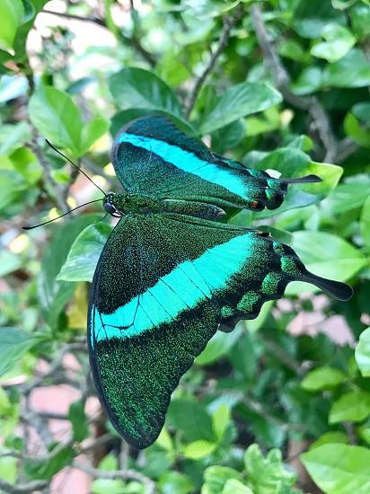 Green butterfly wings  photo