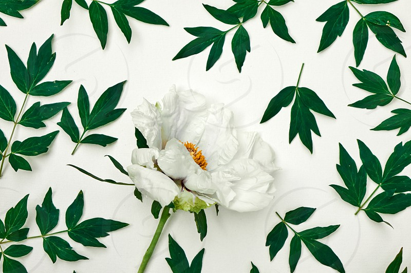Beautiful pattern of a postcard with a white flower and green leaves on a white background shot from above photo