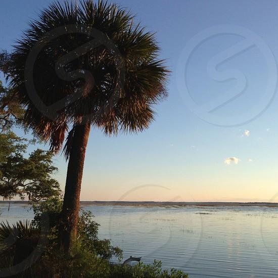 Coastal living. Palm tree on the side of the marsh at sunset. Beaufort South Carolina. photo