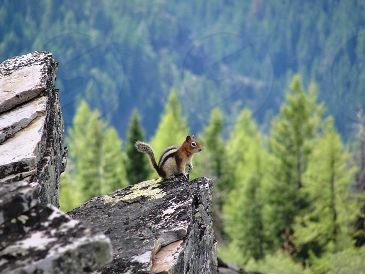 Mountain top squirrel photo