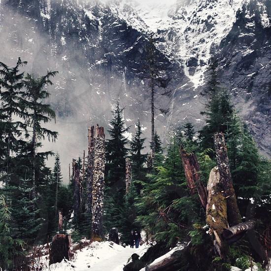 pine trees at snowy mountain photo