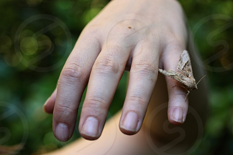 Close up of a hand with a little moth delicately balanced on one finger  photo