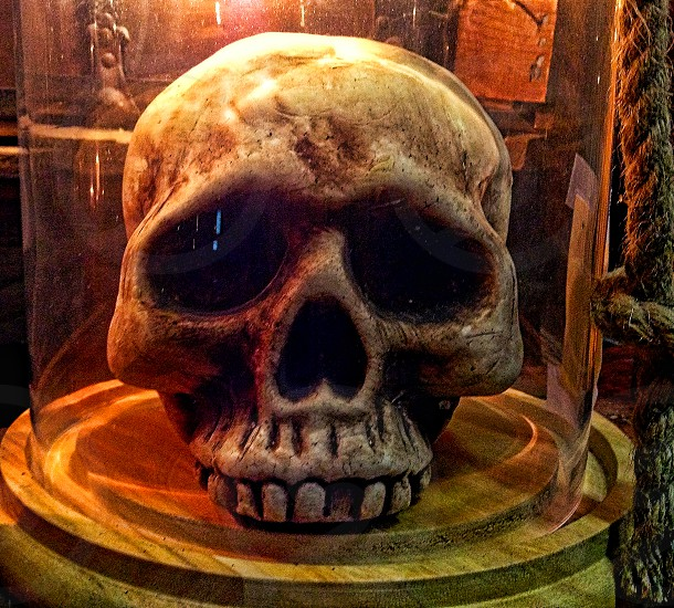 Skull in a glass case is eerily lit with colored light. photo