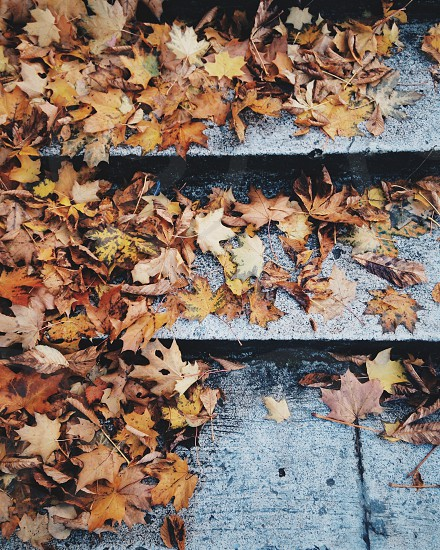 brown dried leaves on stair steps photo