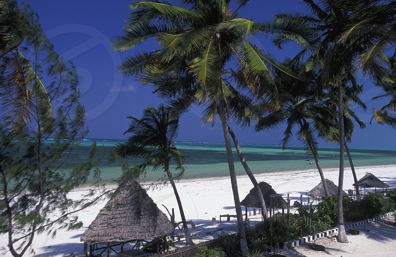 AFRICA TANZANIA ZANZIBAR EAST COAST INDIAN OCEAN  photo