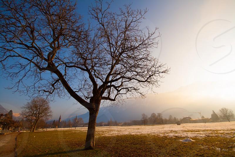 Lonely tree on a snowy field in Intelarken Switzerland photo