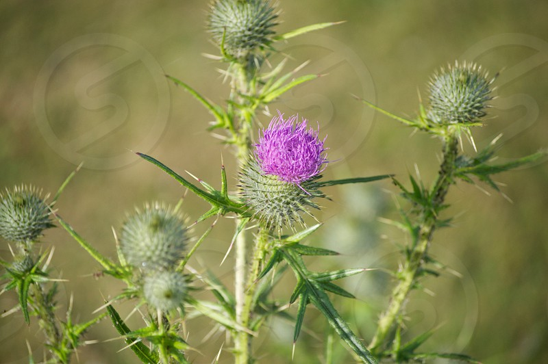 purple thistle selective-focus photo at daytime photo