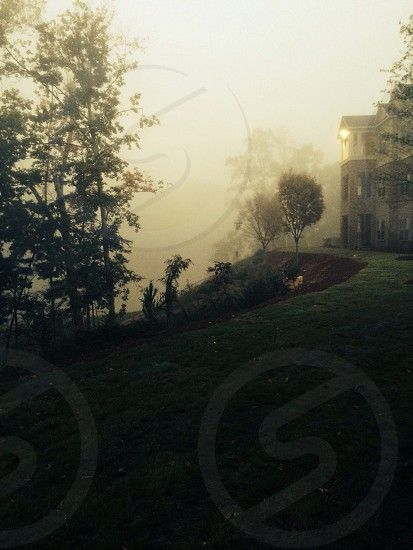 Morning fog photo