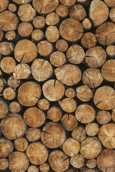 wooden logs photo