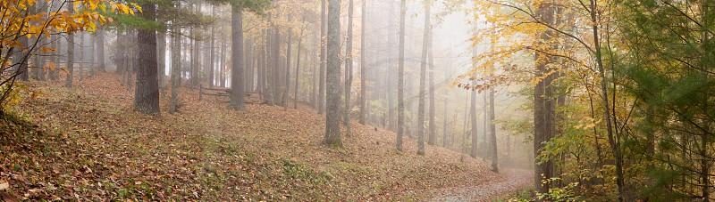 fog in the fall photo