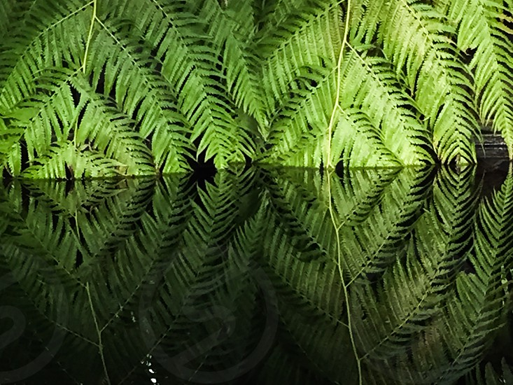 Green; green leaf; reflection photo