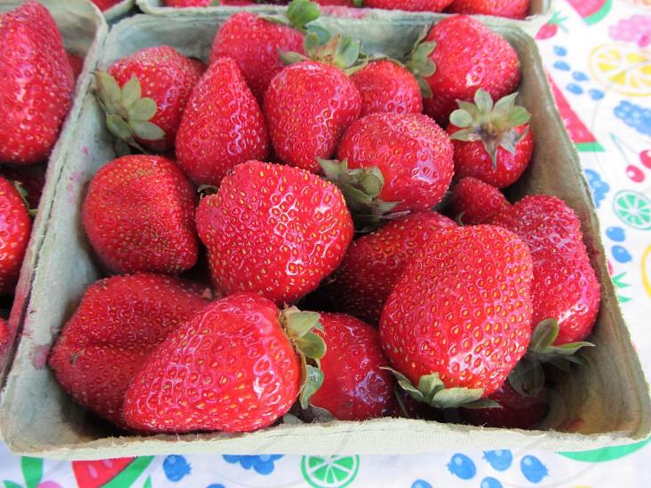 Strawberries in carton photo