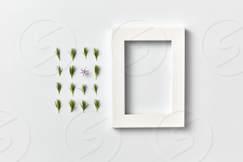 Rectangular composition from green fresh young pine needles and one spring flower and empty frame on a light gray background. Flat lay place for text. photo