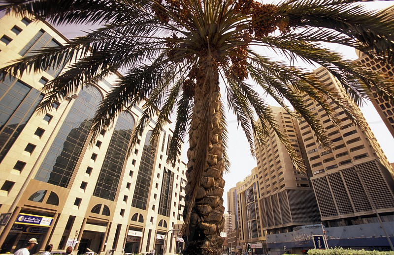 the skyline in the old town in the city of Dubai in the Arab Emirates in the Gulf of Arabia. photo