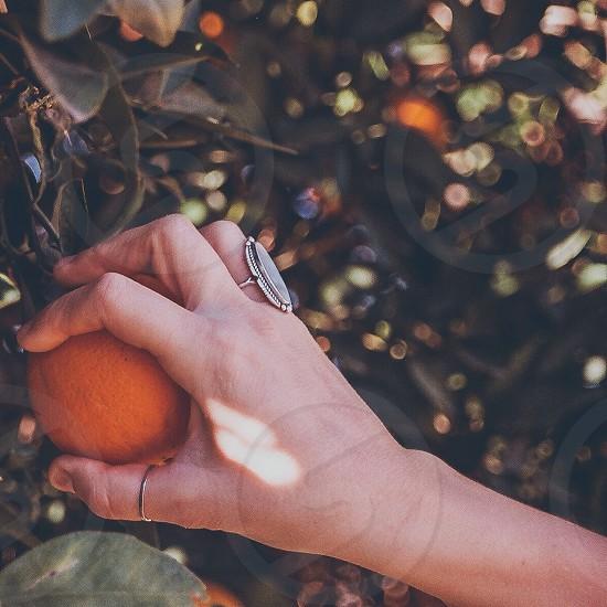 woman's hand holding orange fruit photo
