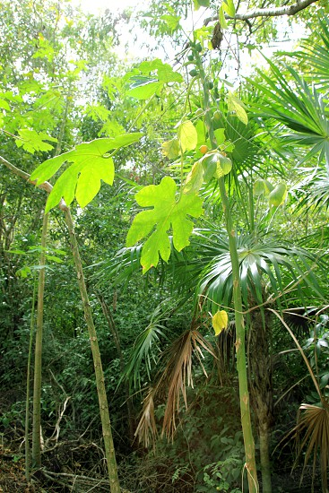 jungle rainforest atmosphere green background central America photo