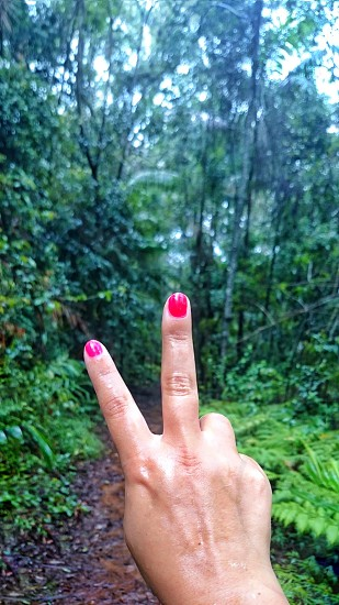 rainforest travel personal experience positive outcome photo