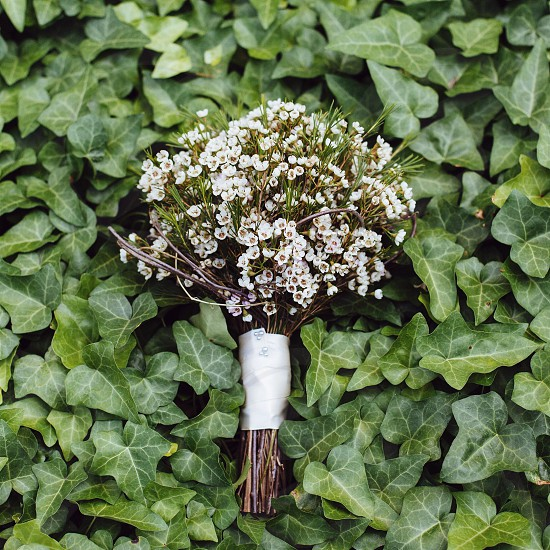 white petaled bouquet of flowers photo