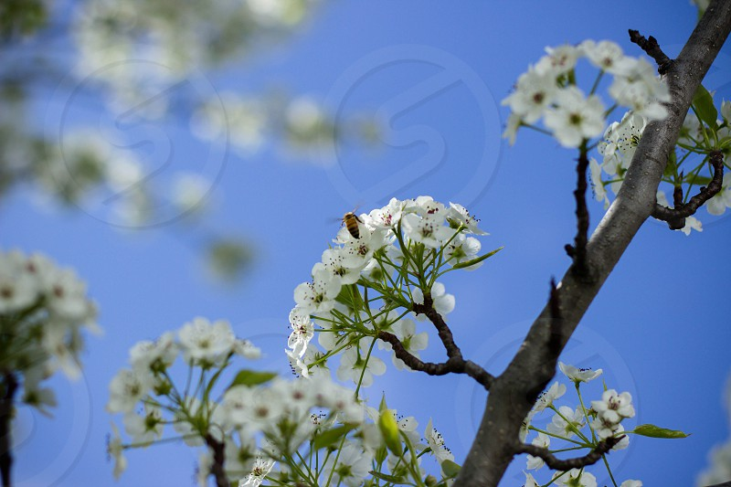 white petaled flower tree selective focus photography during daytime photo