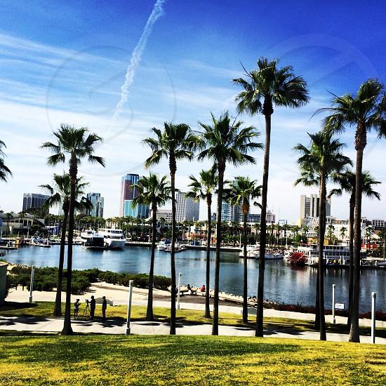 Paradise. Long beach. Palm trees. Marina.  photo