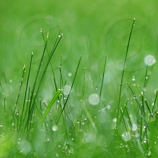 shallow focus photography of green grass field photo