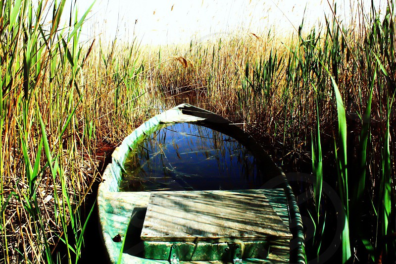 green boat filled with water on swamp photo