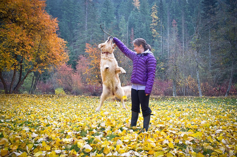 Happy dog jumping in a Fall wilderness scene.  photo