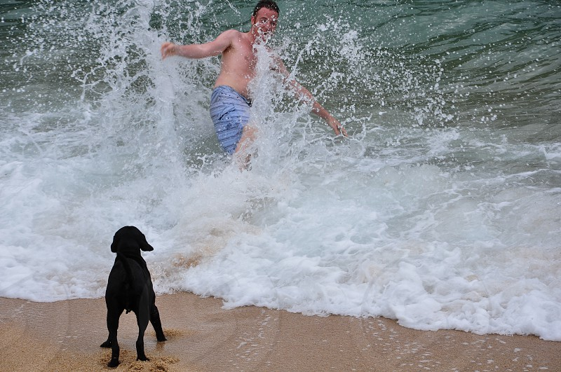 man and dog playing on seashore photo