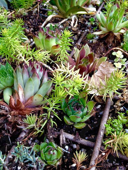 green and brown succulent photo