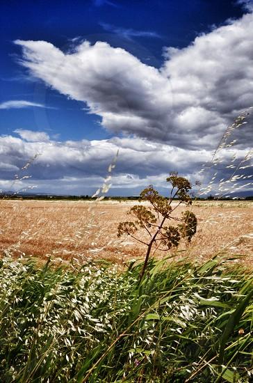 Yellow grass field photo