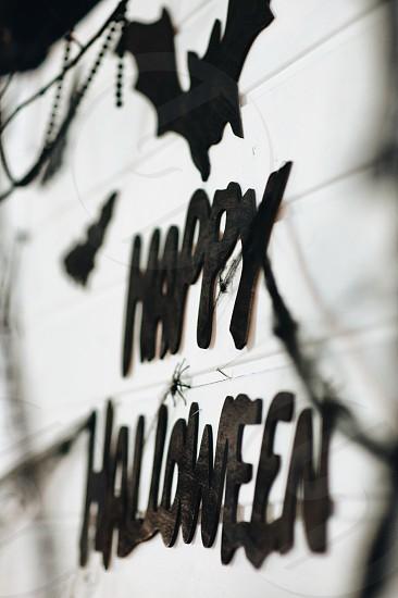 halloween trick or treat  photo