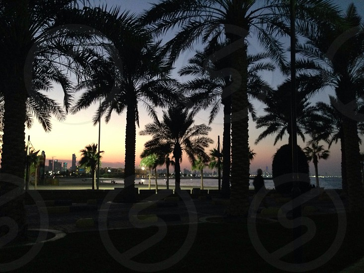 Twilight Time LisAm Sunset  Silhouette Palm Trees photo