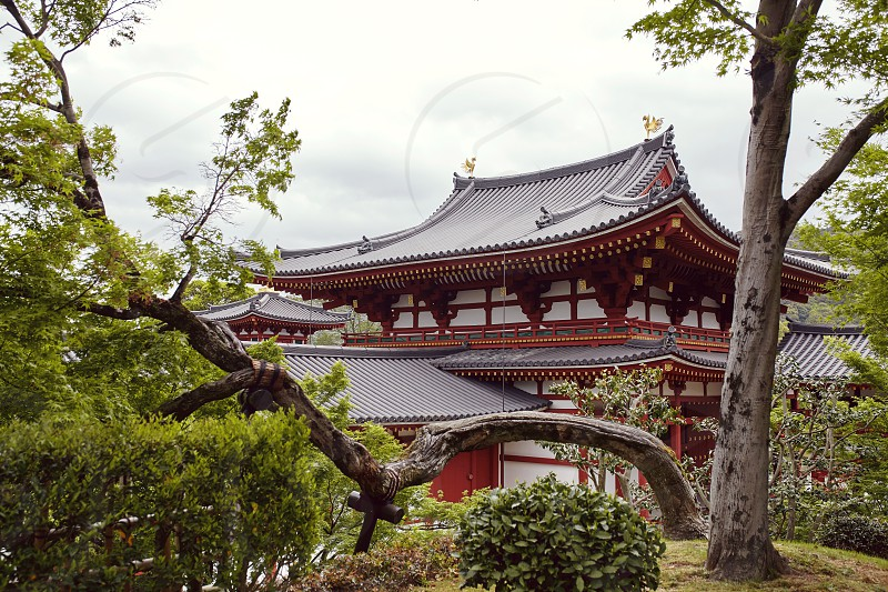 View of Byodoin temple on a cloudy Spring day in Uji. Kyoto Japan photo