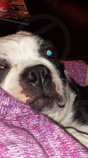 puppy snooze photo