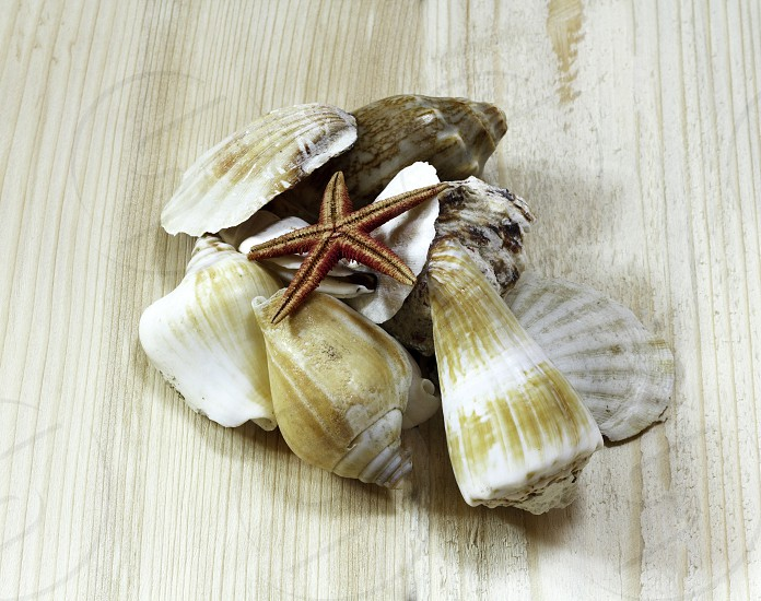 Various sea shells isolated on a natural wooden background photo