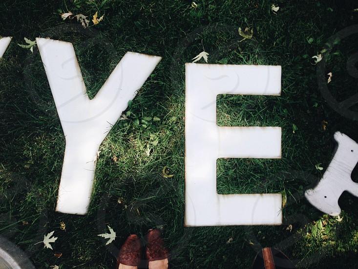white ye on green grass photo