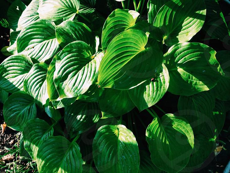 green leaves bush garden summer photo